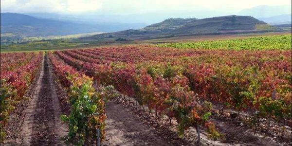 Erlebnisreiche Weinreise