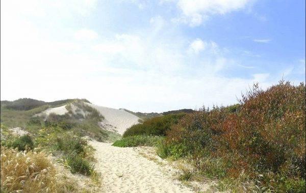 Pilgerweg durch die Dünen