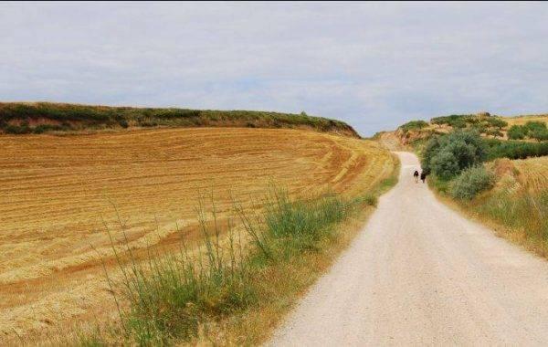Pilgerweg nach Los Arcos