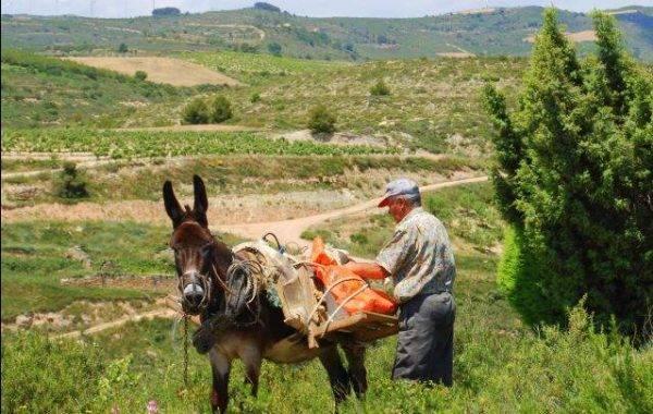 Bauer am Pilgerweg nach Viana