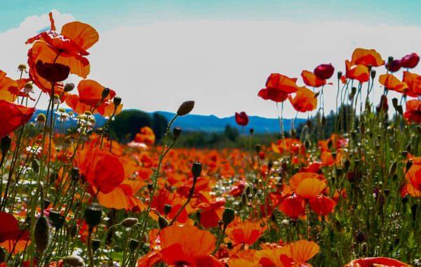 Blühende Felder in Umbrien