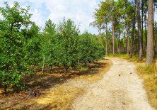 Obstplantagen mitten im Wald