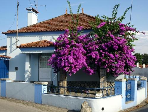 Portugiesen schmücken ihre Häuser gerne mit viel Blumen.