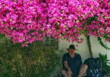 Pilgerrast unter einem Blumenmeer