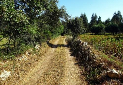 Wunderschöner Pilgerweg direkt hinter Fátima