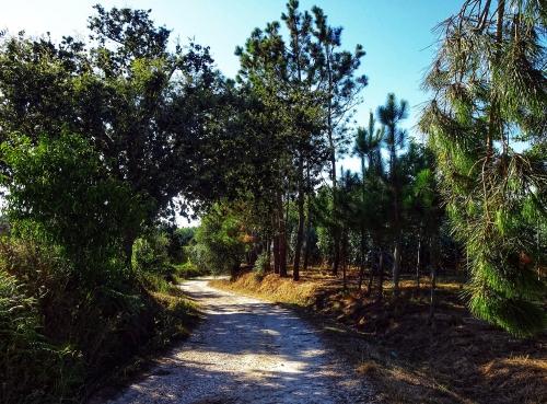 Wundervolle Wege durch lichten Wald.