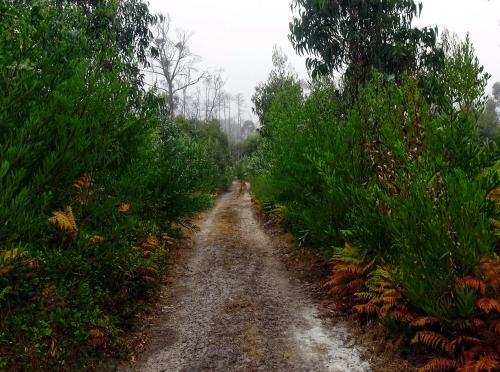 Morgens durch den nebeligen Wald.
