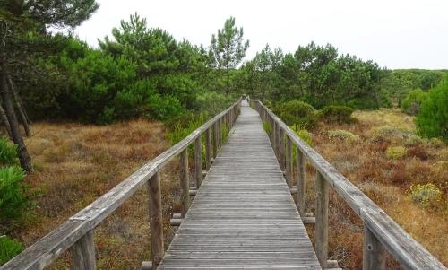 Über einen alten Holzsteg Richtung Dünen