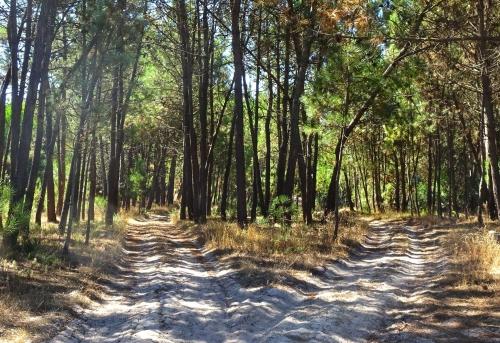 Sandige Jakobswege durch den Wald