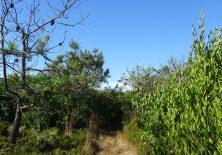 Der Oleander raubt dem Pilger den Weg