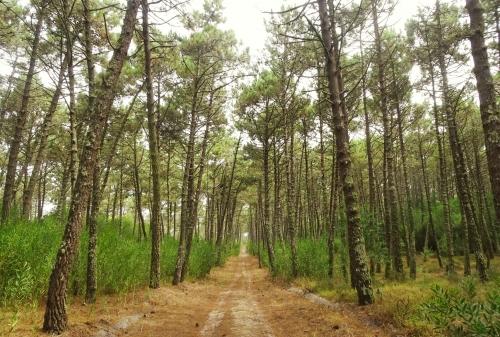 Sechs Kilometer geradeaus durch den Wald. Wirklich schön.