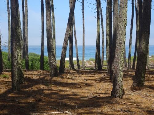 Blick durch den Wald auf das Meer.