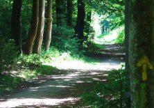 Der gelbe Pfeil weist den Pilgern den Weg durch den Wald.