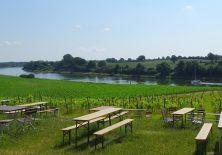Picknickplatz und Weinanbau am Nord-Ostsee-Kanal