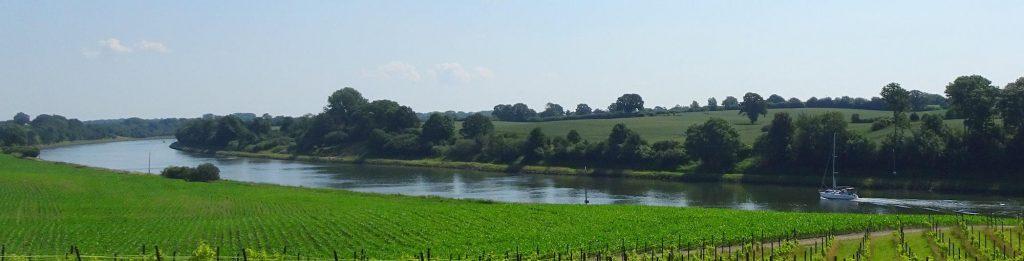 Weinanbau am Nord-Ostsee-Kanal