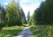 Lange, schöne Waldwege…