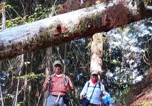 Pilgern auf schönen Waldwegen